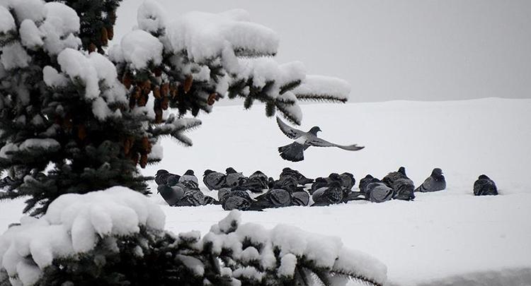 Kar yağışı bekleniyor