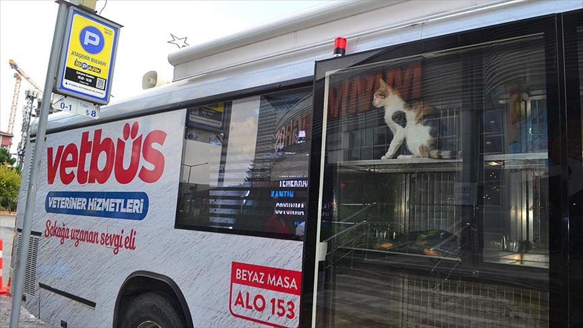 Büyükşehir'den sokak hayvanları için 'Vetbüs'