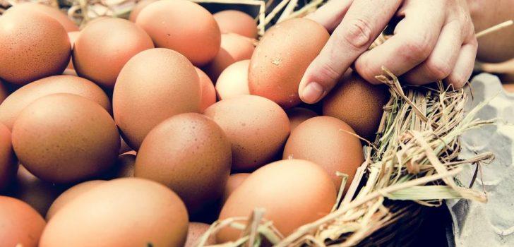 Yumurta ve balıkda KDV yüzde 1