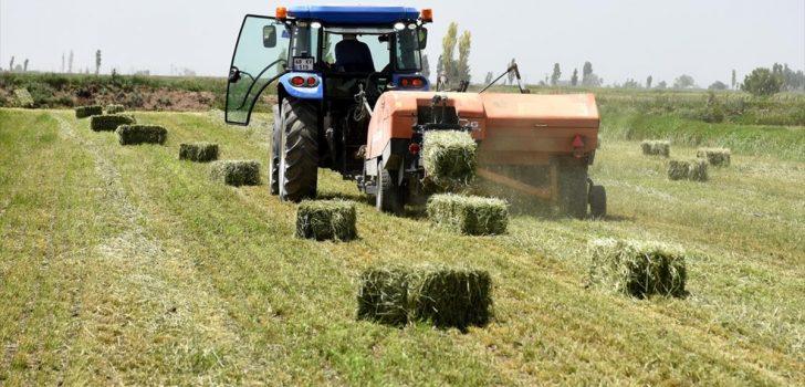Yerli ve milli tohumla üretilen 'süt otu' verimi artırıyor