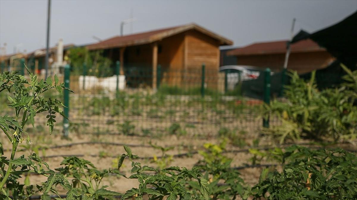 TBMM Tarım, Orman ve Köyişleri Komisyonu Başkanı Kılıç: Tarım arazilerine kurulan hobi bahçelerindeki yapılar yıkılacak