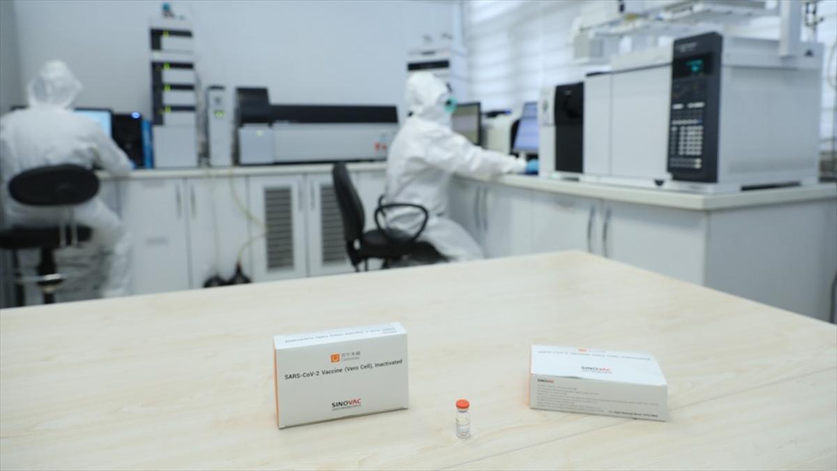 Türkiye'de uygulanacak CoronaVac aşılarına 'acil kullanım onayı'nda sona gelindi