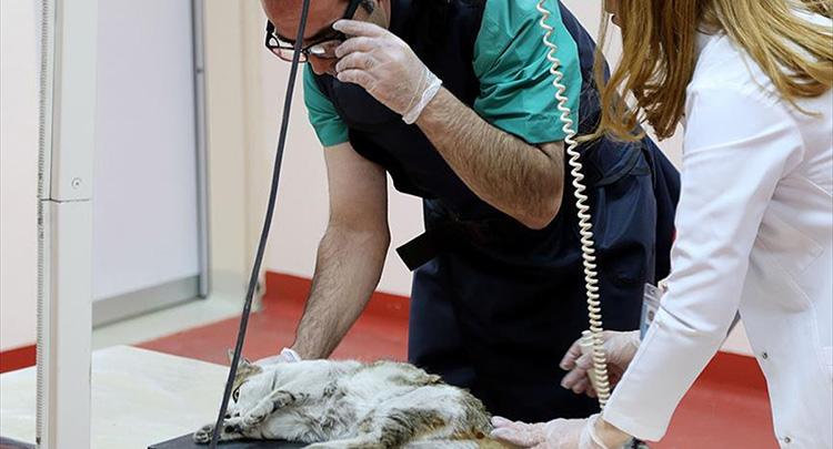 Hayvanlar için 'modern hastane'