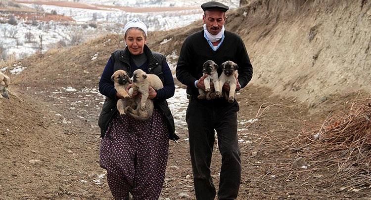 Köyde aç kalan 'yavru köpekler' için 1 ton mama